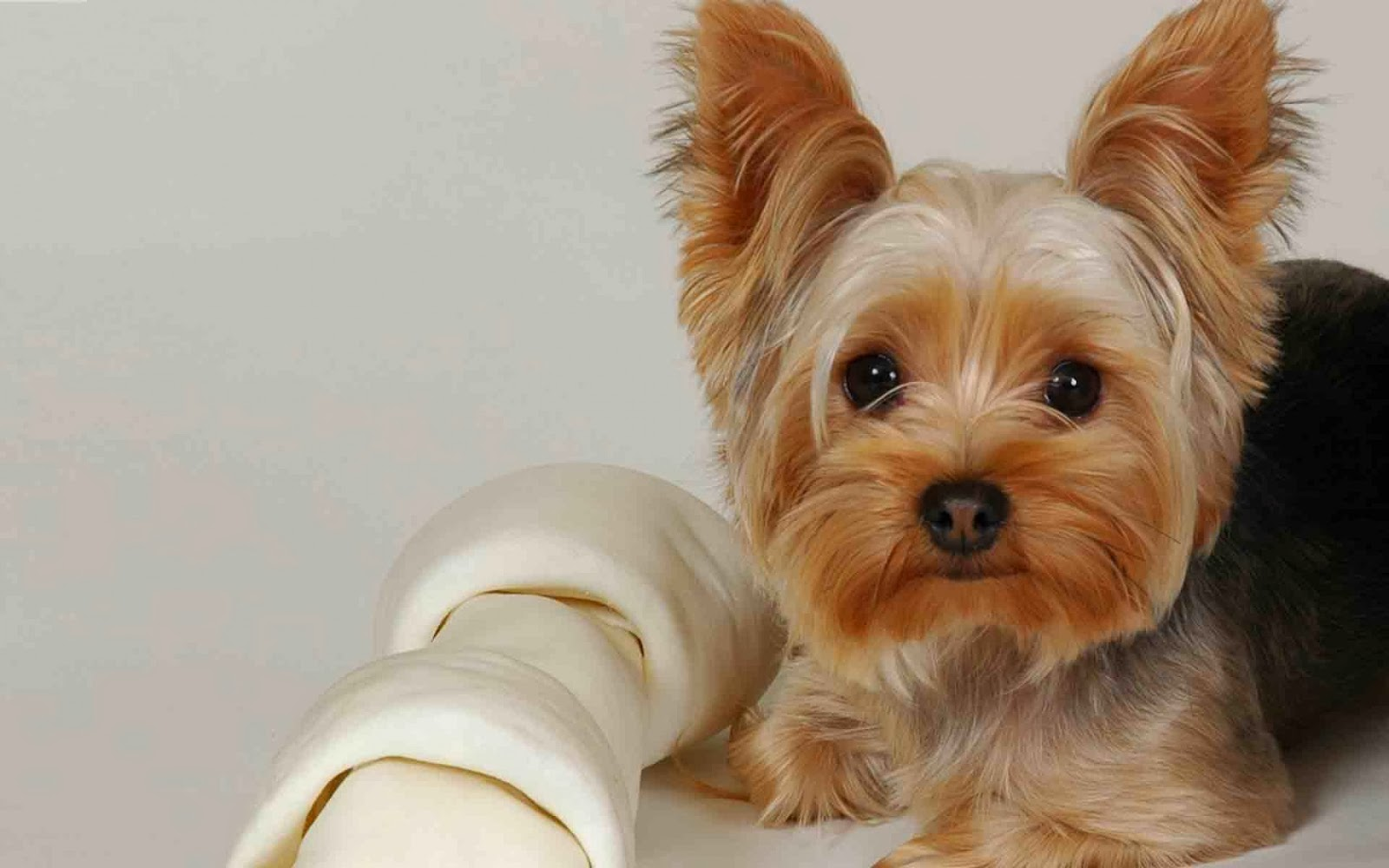 Top 10 Dog Breeds in the World |The Cozy Pet Blog