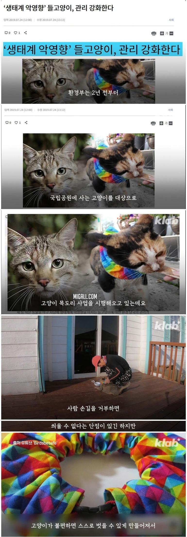 마라도 고양이들이 목도리를 하게 된 까닭 - 꾸르
