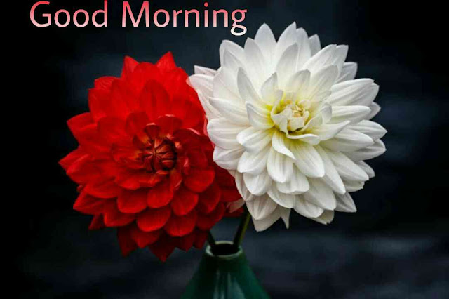 Beautiful good morning images , pics and photos of red and white flowers