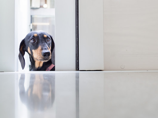 Good Things*: Death by Doxie : Elfi Wants In