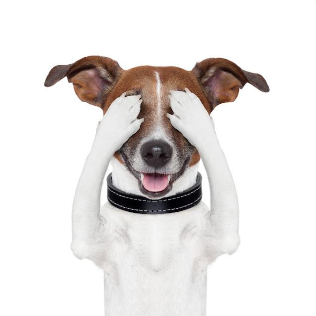 Τα σκυλιά έδειξαν καλή κατανόηση των κοινωνικών κανόνων