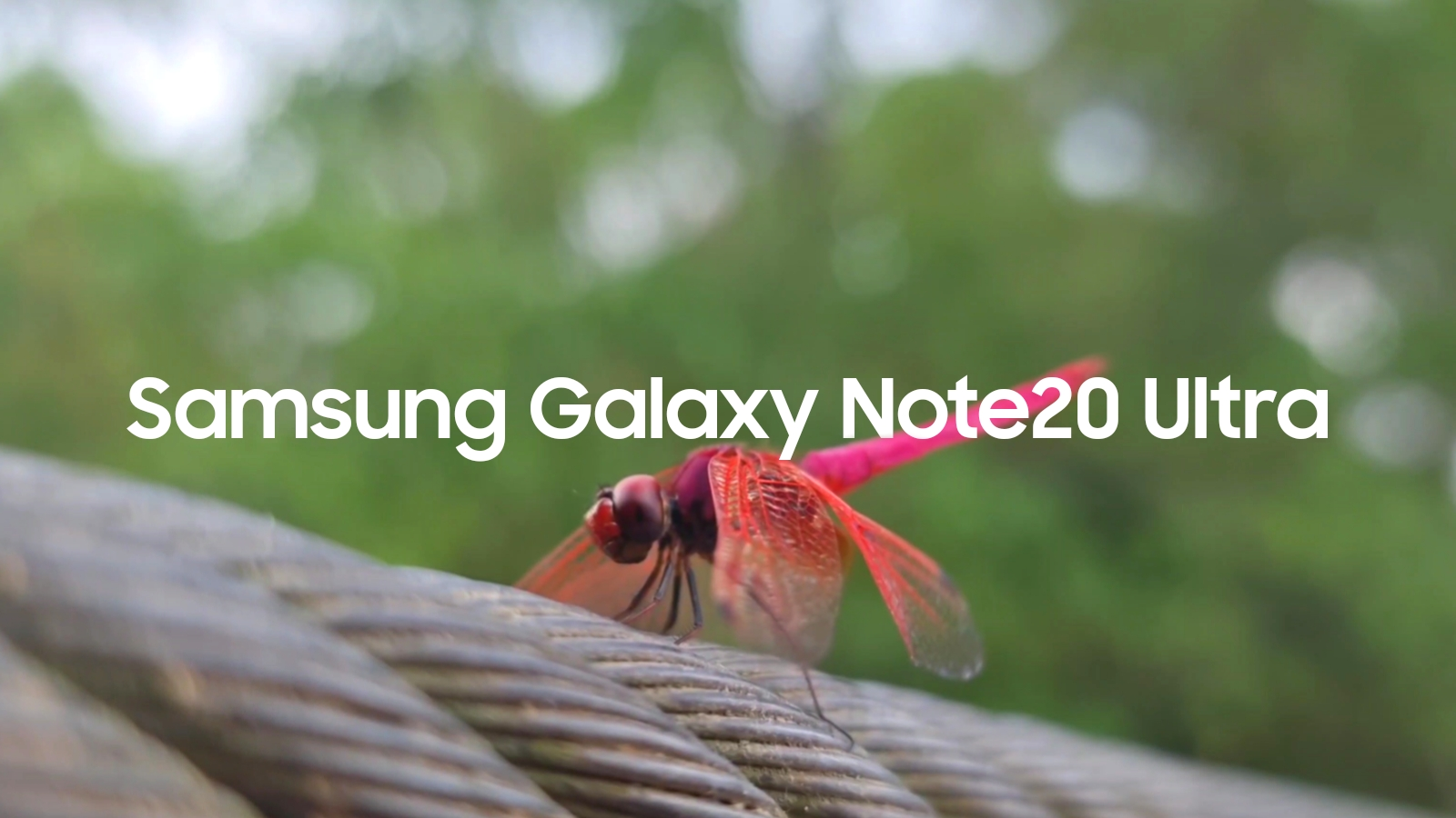 Your Samsung Phone can achieve this natural bokeh visuals for real #withGalaxy Watch the video at the end of this post to find out
