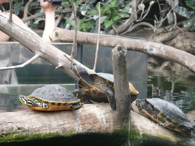 Oceanogràfic Valencia tortugas en aviario