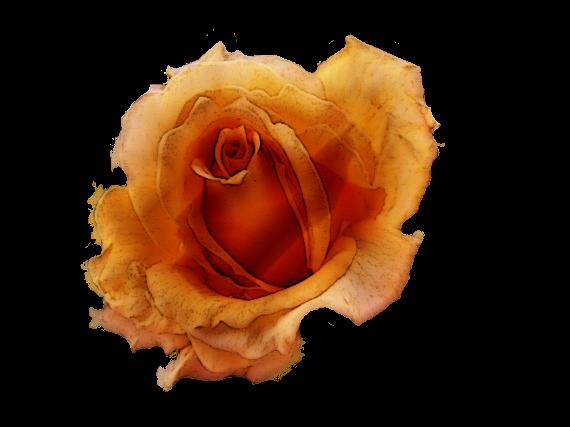 30 Flores Vintage Png Transparente Scrap Clipart