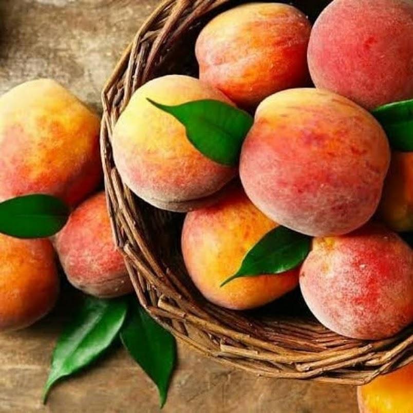 Bibit Buah Persik Peach Tarakan
