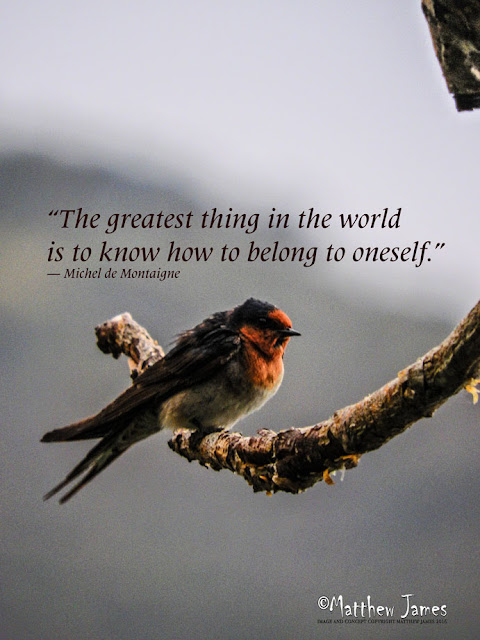 'The greatest thing in the world is to know how to belong to oneself' - Michel de Montaigne