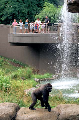 WHAT DOES A ZOO LOOK LIKE?