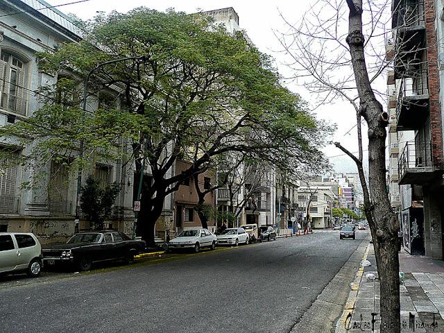 Calle de barrio con arbol grande .