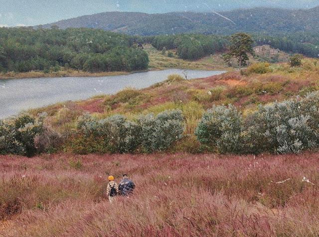 Đến với Đà Lạt hãy ngắm đồi cỏ hồng đuôi chồn đẹp tựa xứ Nhật Bản đẹp mê hồn 3