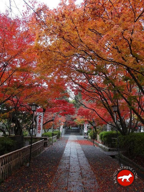 érable dans un temple de kyoto en automne au Japon