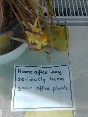 Home office may seriously harm your office plants. Homeoffice kann Ihre Büropflanzen ernsthaft schädigen.