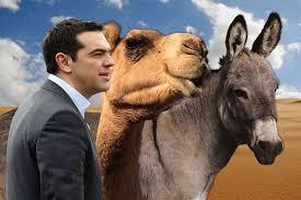 Ραντεβού με καμήλες