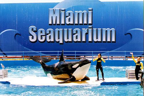Miami Seaquarium Key Biscayne