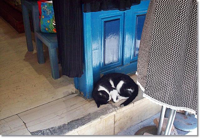 gatti a Chania