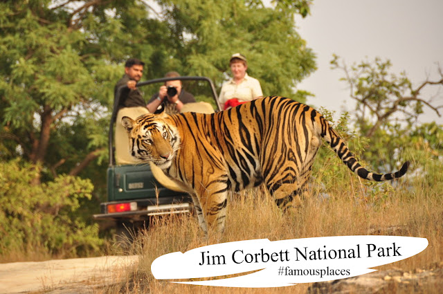 Jim corbett national park trip