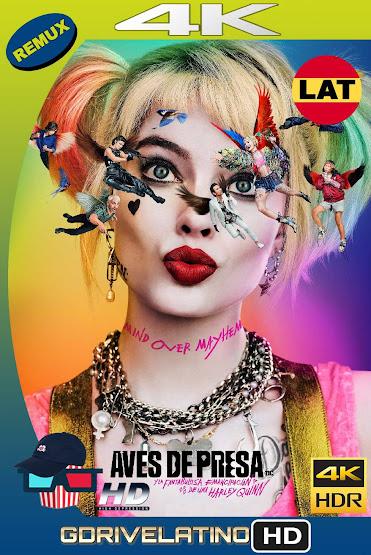 Aves de Presa (2020) BDRemux 4K HDR Latino-Ingles MKV
