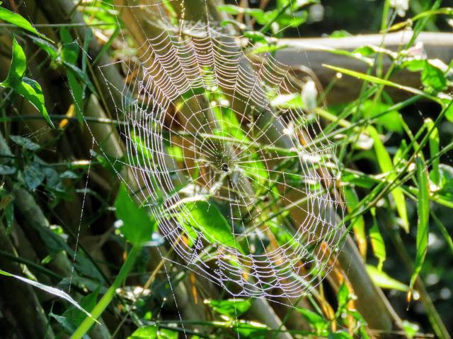 Spiderweb near Bigodi Wetlands in Uganda