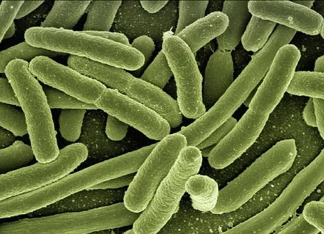 Penjelasan tentang penyakit infeksi