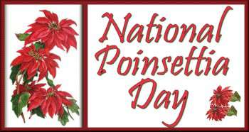 National Poinsettia Day Wishes for Instagram