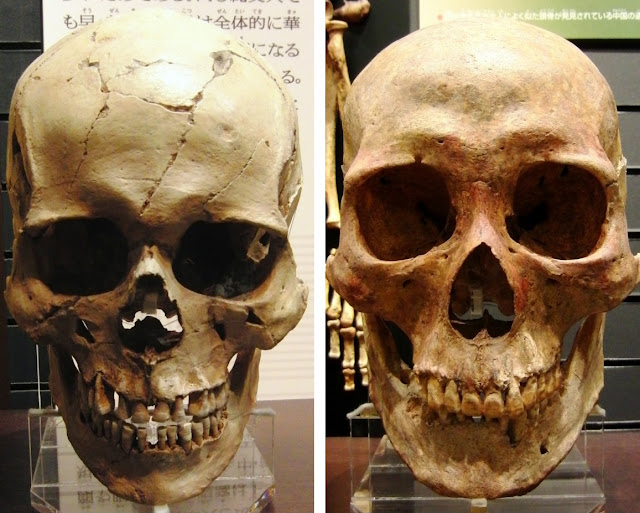 Y chromosomes reveal population boom and bust in ancient Japan