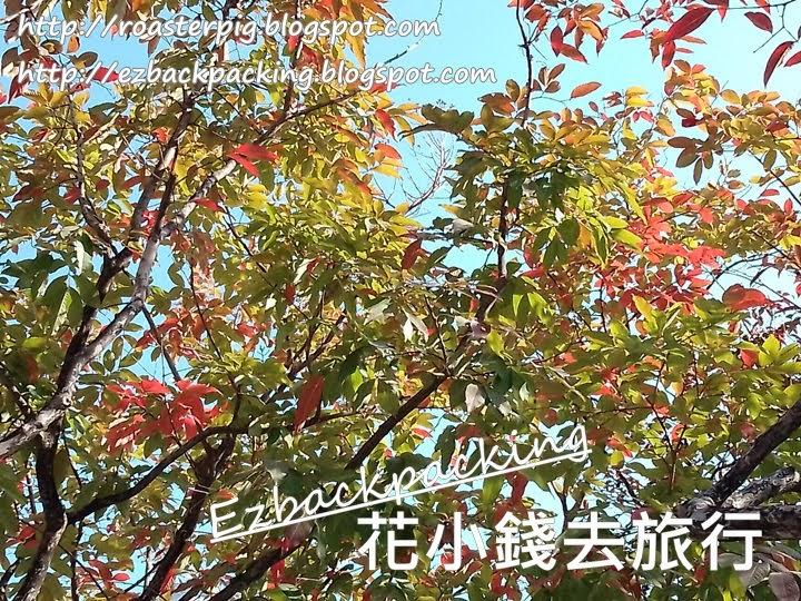 尖沙咀紅葉