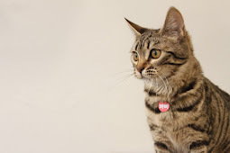 Jenis Kucing Bengal