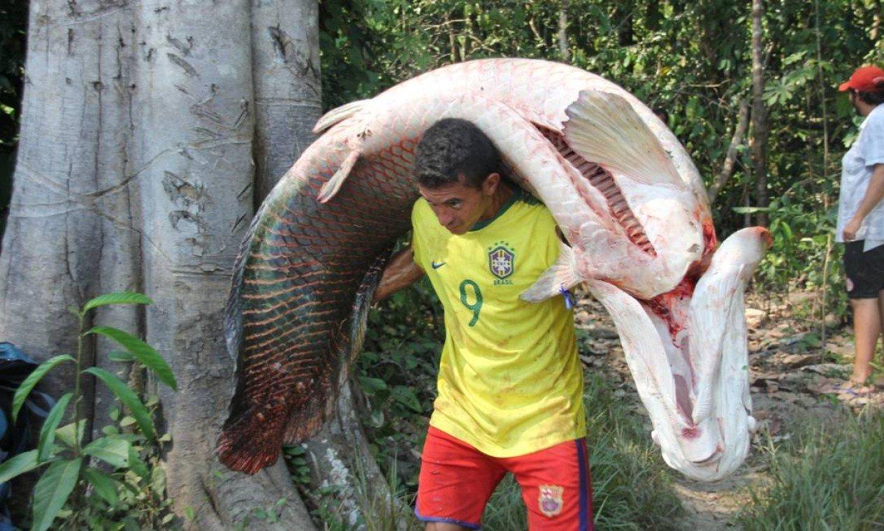 Pirarucu de manejo chega pela 1ª vez aos restaurantes do Rio de Janeiro; 4 toneladas