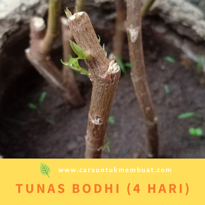 Tunas Bodhi (4 Hari)