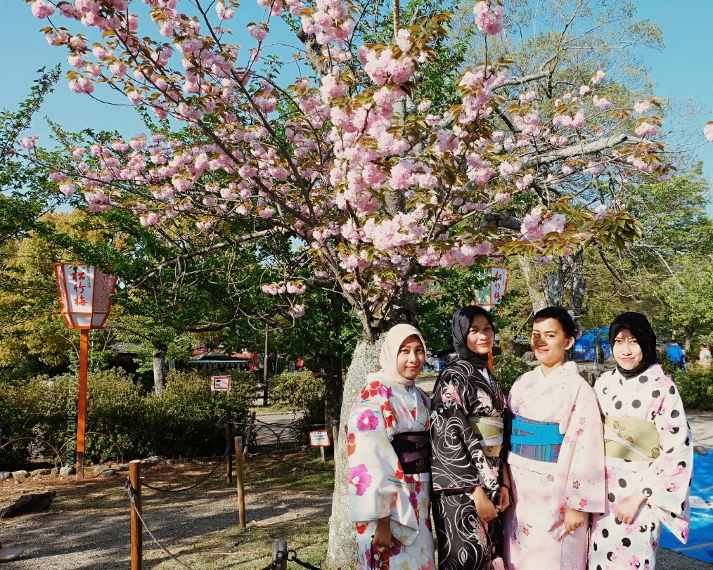 sakura in maruyama park