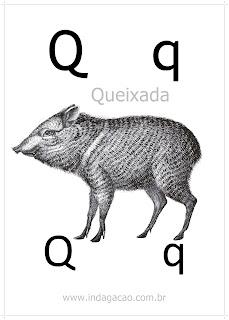 alfabeto-ilustrado-com-animais-pronto-para-imprimir-em-pdf-download-letra-q