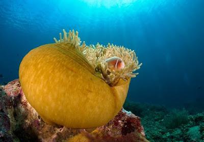 Wisata Taman Laut Bunaken -Syurga Menyelam Terbaik Di Dunia