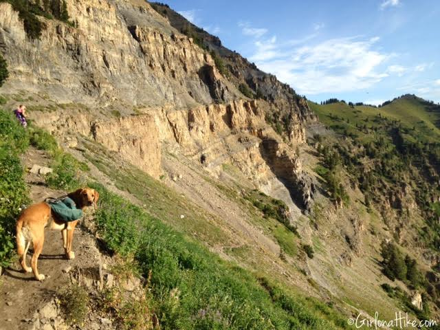 Can Dogs Hike Mt Timpanogos