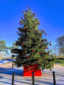 How to choose care for a real Christmas tree