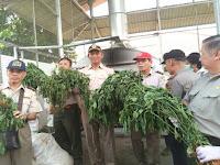 Warga China Tanam Cabai Berbahaya Di Indonesia Ini Dampak Mematikan dari Benih Cabai itu