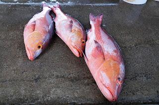 fish with fats vitamin d