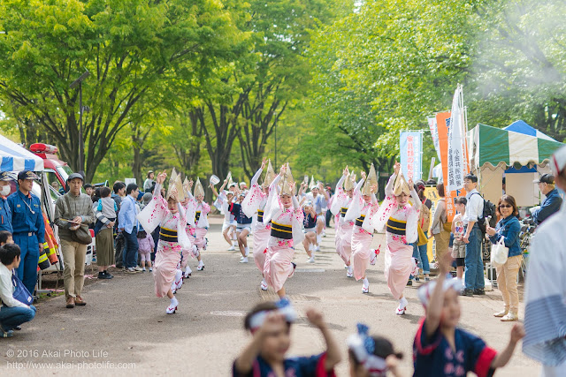 紅連の阿波踊りの流し踊りを正面から撮影した写真