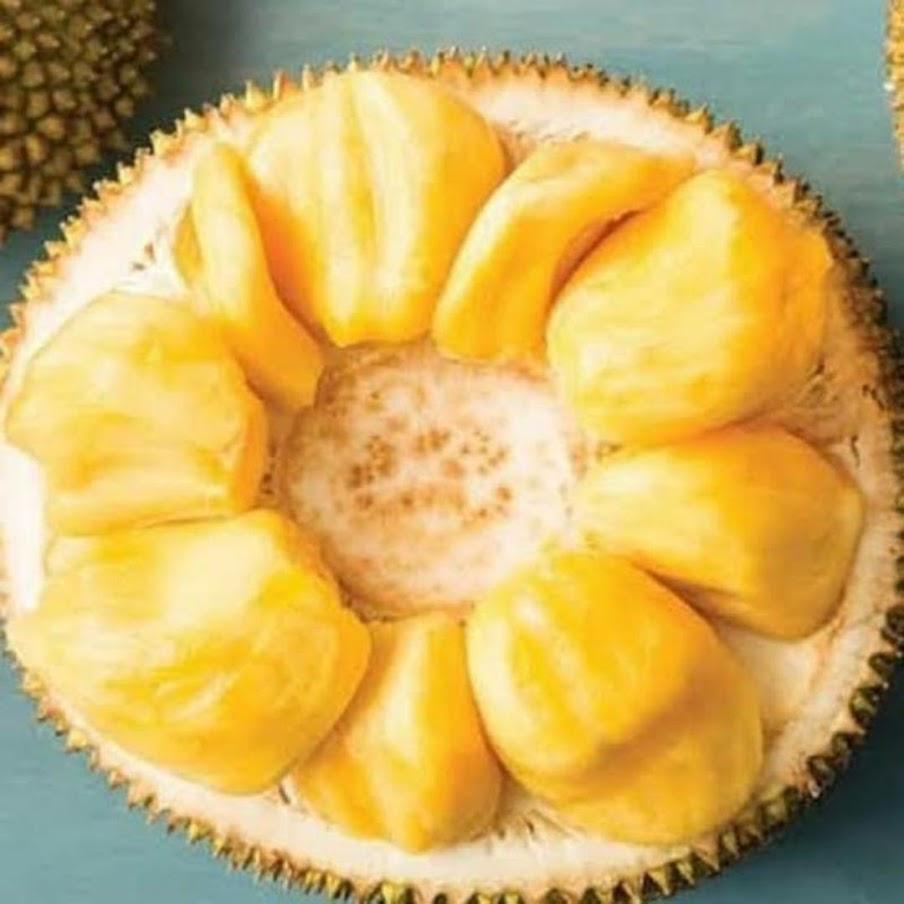Bibit buah nangka mini Tegal
