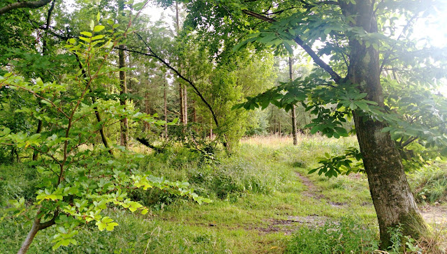 A pathway through the forest at Forest Glade Holiday Park