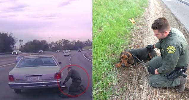 """""""Его практически намотало на колесо!"""" У этого пса всё пошло не так… пока не случился хэппи-энд!)"""