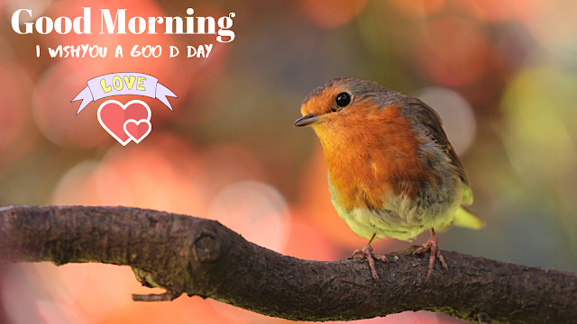 cute Bird Good morning Images