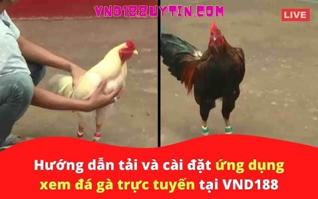 Hướng dẫn tải và cài đặt ứng dụng xem đá gà trực tuyến tại VND188