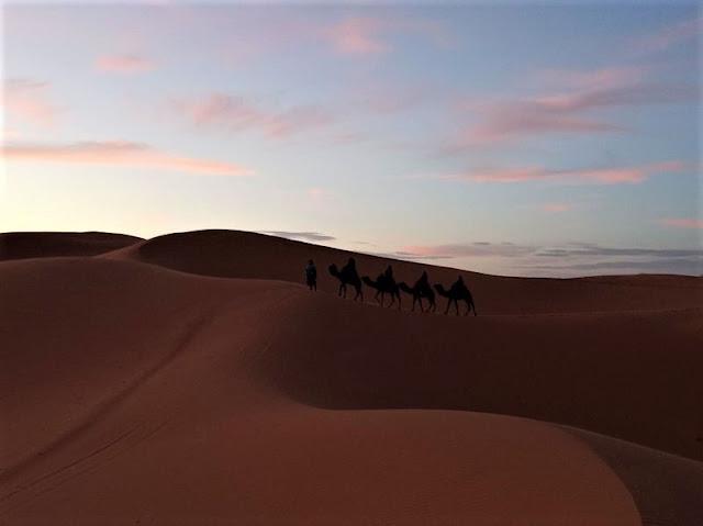 cammellata nel deserto al tramonto