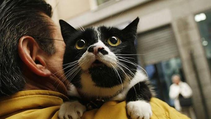 Se registra primer caso de transmisión de covid-19 de una persona a un gato