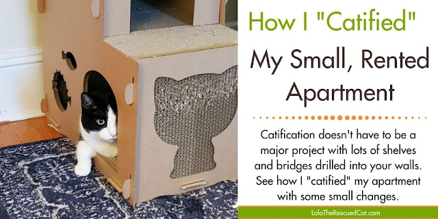 Catify small rented spaces