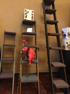 Coco, the Cornish Rex, checking out the Cat Style Lounge at BlogPaws