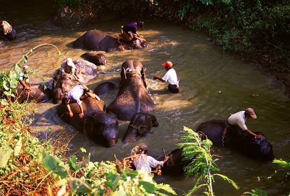 Elephants at Alaungdaw Kathapa Wildlife Reserve