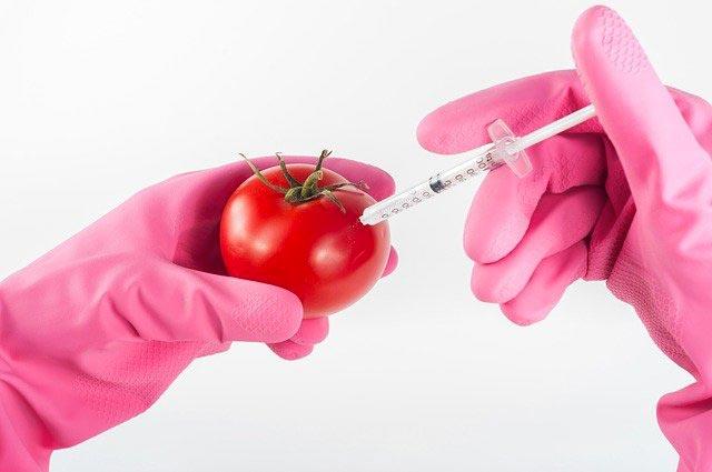 مخاطر الأغذية المعدلة وراثيا