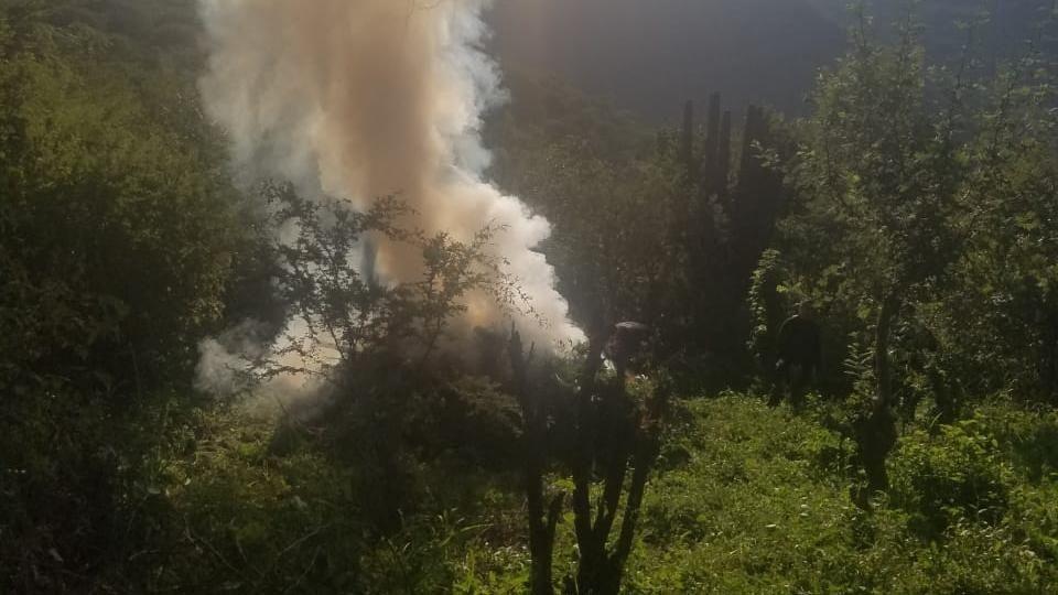 Hallan plantíos con 19 mil matas de marihuana en Tequila; Jalisco