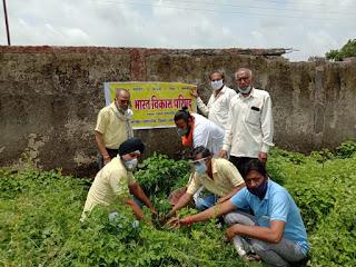 भारत विकास परिषद का स्थापना दिवस वृक्षारोपण एवं आरोग्य काढ़ा वितरण कर मनाया