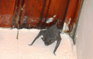 Resultado de imagen para murciélagos en el bolson